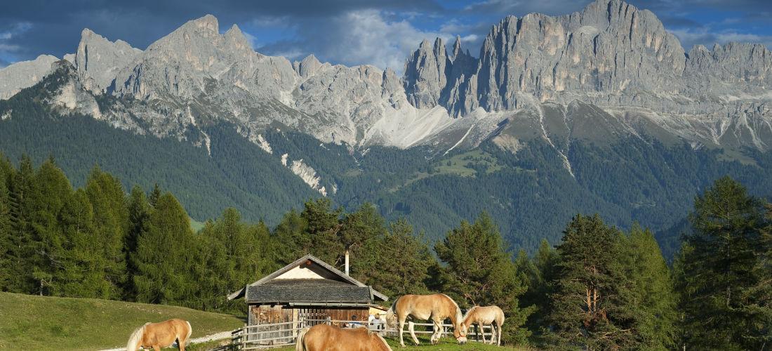 Alto Adige.
