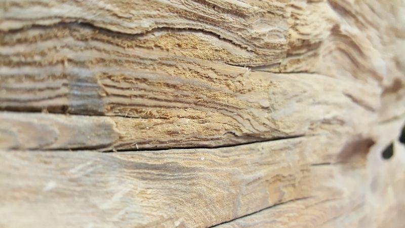 Cypress-Wood-Velvet-Cypress