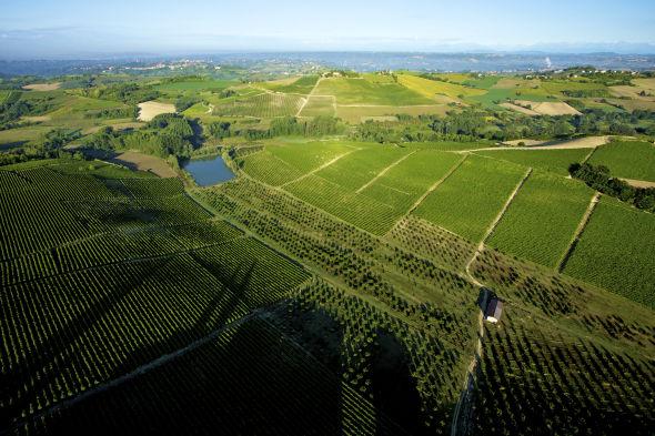 Azienda vitivinicola Montalbera
