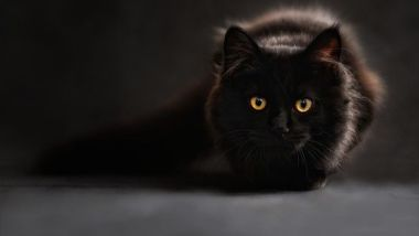 gatto_trasportino